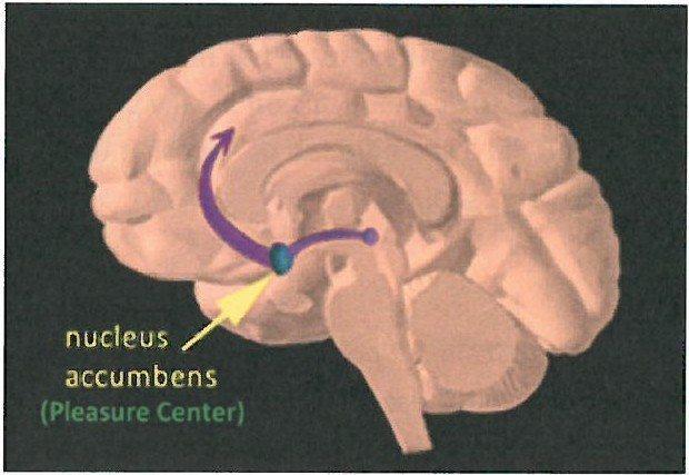 Brain Pleasure Center