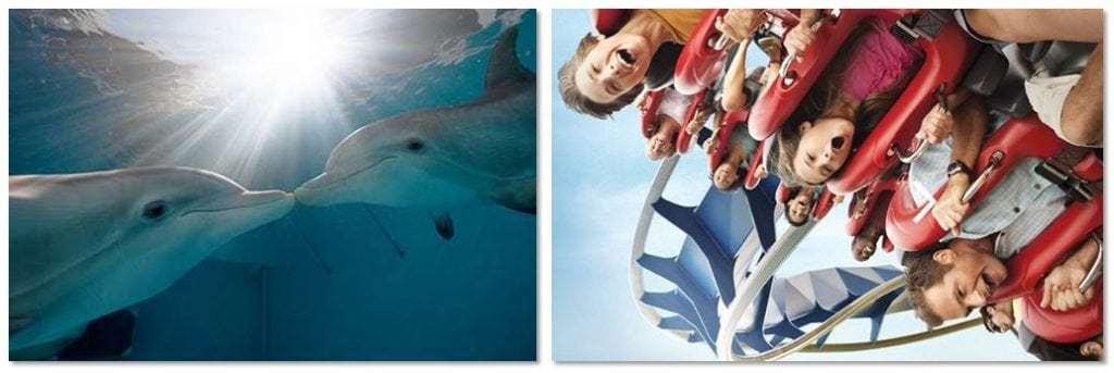 Dolphins-BuschGardensTampa
