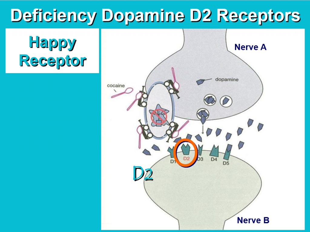 dopamine receptors