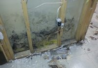 Mold Toxicity Treatment