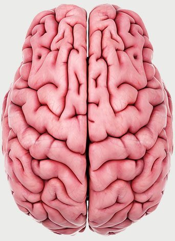 Additional Brain Disorders Caused By Mold Toxins