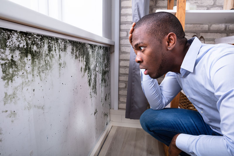 Toxic Black Mold the Deadly Fungi